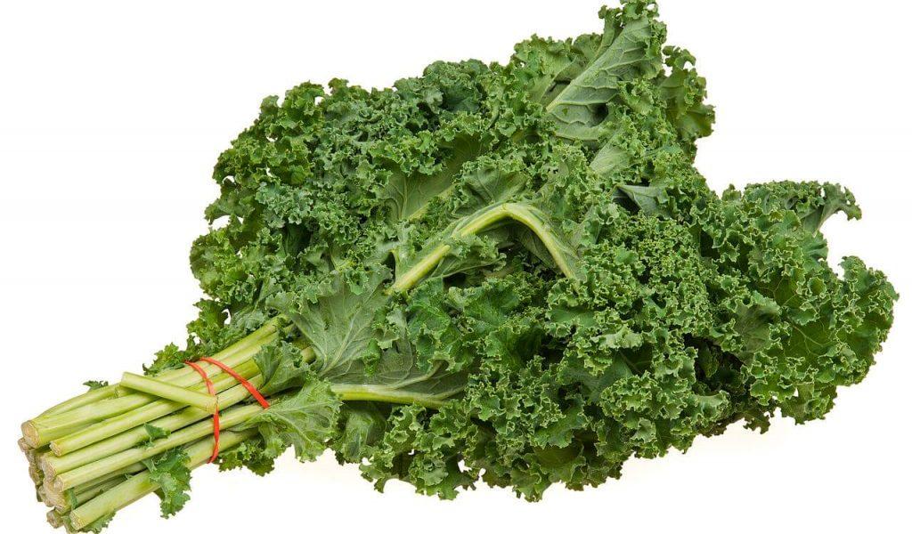 branche de Kale